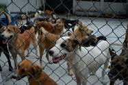 Alcaldía de Ibagué gestiona ayuda animal