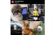 Mascotas de La Mega Ibagué