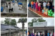 Así avanza la jornada de adopción y donación en el CAPA