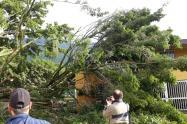 Caída de árbol en el Conservatorio de Ibagué