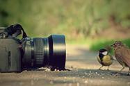 Participe en la convocatoria de fotografía de la Universidad del Tolima