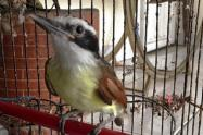 La prohibición para la tenencia de aves no entrará a regir sino hasta 10 años después de la promulgación de la ley