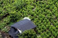 Sábado, 13 de junio vence el plazo para que los productores del Tolima se presenten a la convocatoria Alianzas Productivas