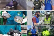 Animales rescatados en Ibagué