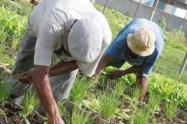 Mejorar la productividad, fortalecer los procesos de transformación y agroindustria y generar valor agregado