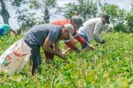 Licitación Pública para contratar la Prestación del Servicio Público de Extensión Agropecuaria