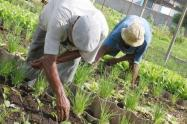 Agricultores del Tolima.