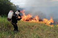 Incendio forestal en Palermo