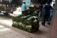 planta de hojas de cachaco