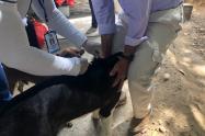 Protocolos para evitar propagación de rabia humana en Neiva