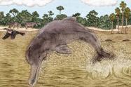 Fósil de un delfín en el desierto de La Tatacoa