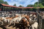Feria ganadera en el Guamo Tolima