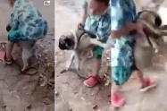 Maltrato Animal en Rovira