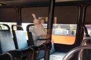 Inspección de Personería buses Ibagué