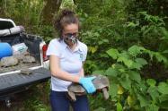 Rescate de animales por Cortolima