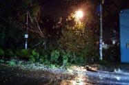 árbol caído en Ibagué 28 de noviembre
