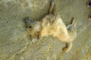 Animal aparentemente envenenado en Soacha