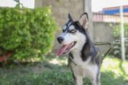 En Neiva han vacunado más de 50 mil  perros y gatos contra la rabia