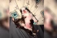 Skipper, perrita que nació con seis patas