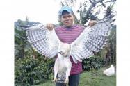 Águila Real de Montaña asesinada