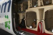 ICA-reglamenta-ingreso-y-salida-de-mascotas-desde-aeropuertos.jpg