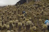 Parque-Nacional-Natural-Nevados.jpg
