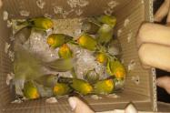aves-incautadas.jpg