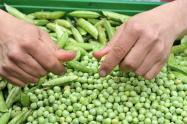 bajan_precios_de_arveja_verde_chocolo_y_pepino_pero_suben_los_de_zanahoria.jpg