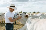 foto-ICA-ganado-bovino-ministro-agricultura.jpg