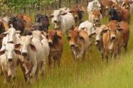 vacas.jpeg