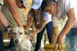 En Ibagué son abandonadas alrededor de 600 mascotas al mes