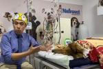 Murió Koko, el perro que salvó a sus amos de abejas africanizadas
