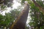 Bosques Huila