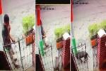 Roban perros en Ibagué