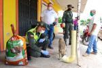 Perro y gatos callejeros