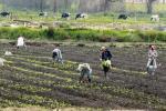 Campesinos temen perder cosechas