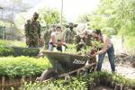 Reforestación en el Tolima