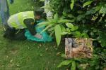 Protegieron y entregaron zorro que se encontraba en lamentables condiciones a Cortolima