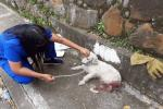 Capa atención animal 2020 Ibagué