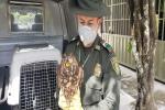 Operativos de fauna y flora silvestre en Tolima
