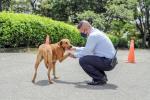 perros pueden salir CAPA Ibagué