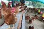Mujeres excombatientes comercializadoras de huevos campesinos en el Huila