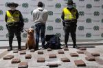 ¡De nuevo lo hizo Jefry!, el canino antinarcóticos detectó a un pasajero en Boquerón con 19 kilos de marihuana