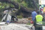 Cayó árbol sobre caseta y esta se incendió en el Parque Andrés López de Galarza en Ibagué