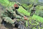 Primer vivero a nivel nacional de Palma de Cera fue creado por la Sexta Brigada del Ejército Nacional