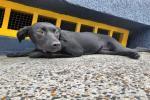 Rescate animal con CAPA en Ibagué